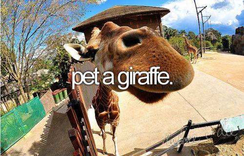 x | pet a giraffe