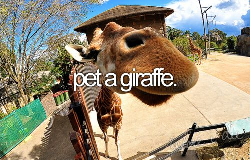 I want to sooooo bad!: Bucketlist, San Diego, Pet, Before I Die,  Camelus Dromedarius, The Zoos, My Buckets Lists,  Dromedary, Giraffes