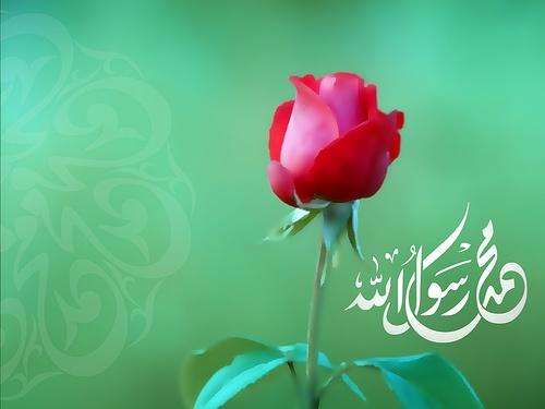 """El Profeta Muhammad (swas) dijo: """"Si pones tu confianza en Allah como es debido, Él te alimentará como alimenta a los pájaros que parten (de su nido) con el vientre vacío y regresan saciados""""."""