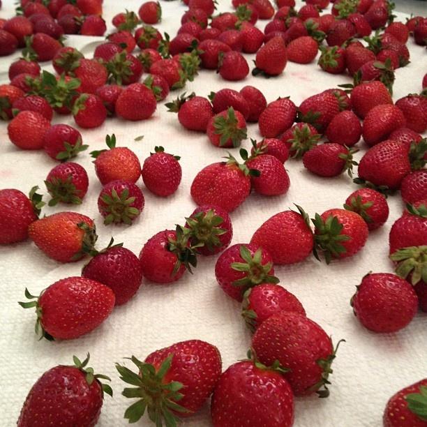 Strawberries (image by @ReneeDobbs)