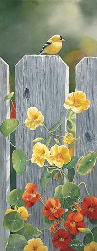 1085210029:Golden Afternoon-Goldfinch Print