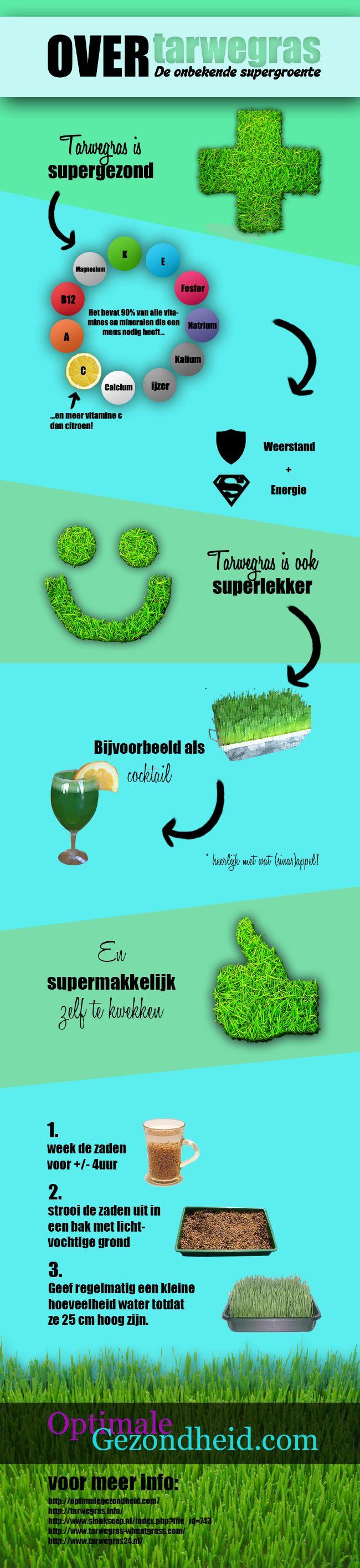 Infographic over Tarwegras + complete samenvatting!