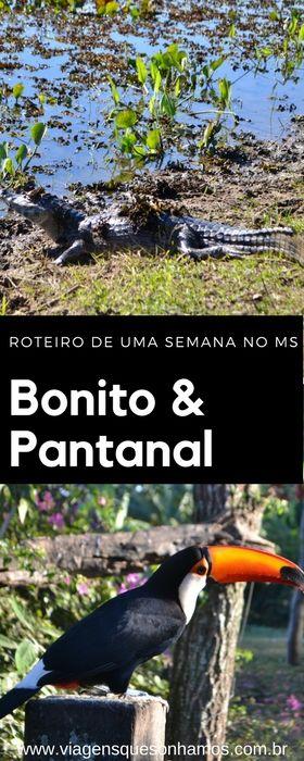Roteiro de uma semana com crianças conhecendo o Pantanal Sul Matrogrossense e Bonito