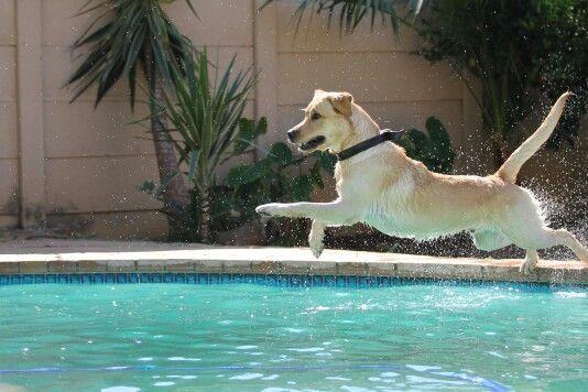 Rocky love swimming