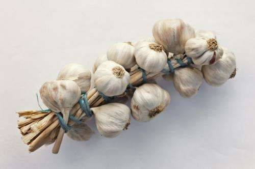 New study shows aged garlic extract can reduce dangerous plaque buildup in arteries. 2,400 milligrams of Aged Garlic Extract every day. A follow-up screening conducted a year after the initial screening found those who had taken Aged Garlic Extract had slowed total plaque accumulation by 80%, reduced soft plaque and demonstrated regression (less plaque on follow-up) for low-attenuation plaque.