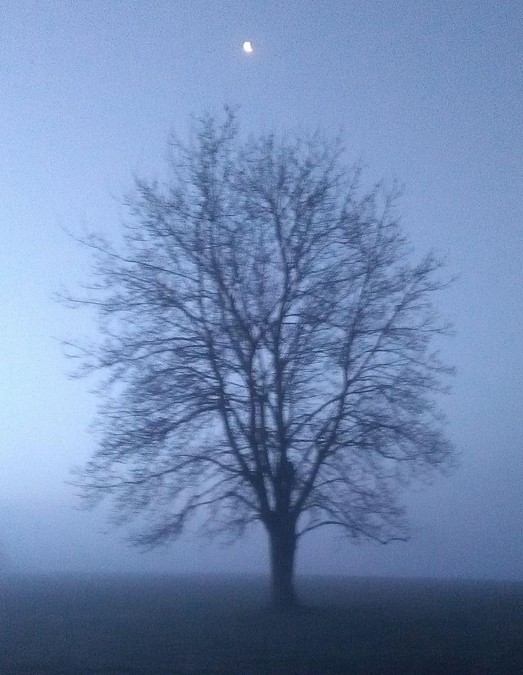 Tree in Midwinter Fog, beneath the moon, the dawn light slowly awakening.