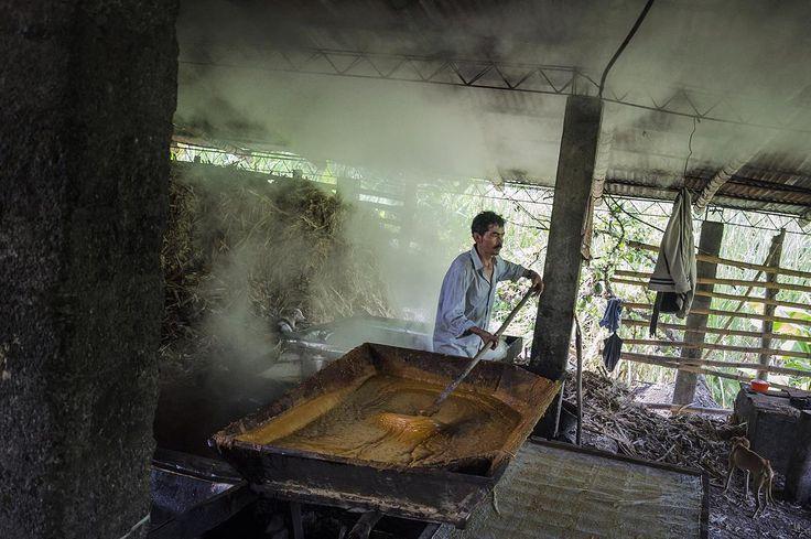 La Virgen de Quipile, Colombia  Ph: Daniela Rojas Vizcaíno @nani_rouge / Tejiendo Memoria  Durante el proceso de fabricación, se hace limpieza de jugos para eliminar impurezas, se calienta a grandes temperaturas para que se evapore el agua y se concentra la miel en una paila y se mezclan para que adquiera la textura para finalmente moldearla.  #TejiendoMemoria #HistoriasDeMiAldea #everydaylatinamerica #lavirgendequipile #colombia #travel #trabajo #trapiche #tradición #panela #producción…