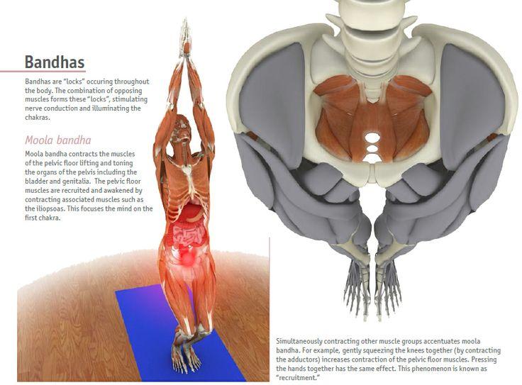 Pelvic Floor Muscles: Yoga Asanas For Pelvic Floor Muscles