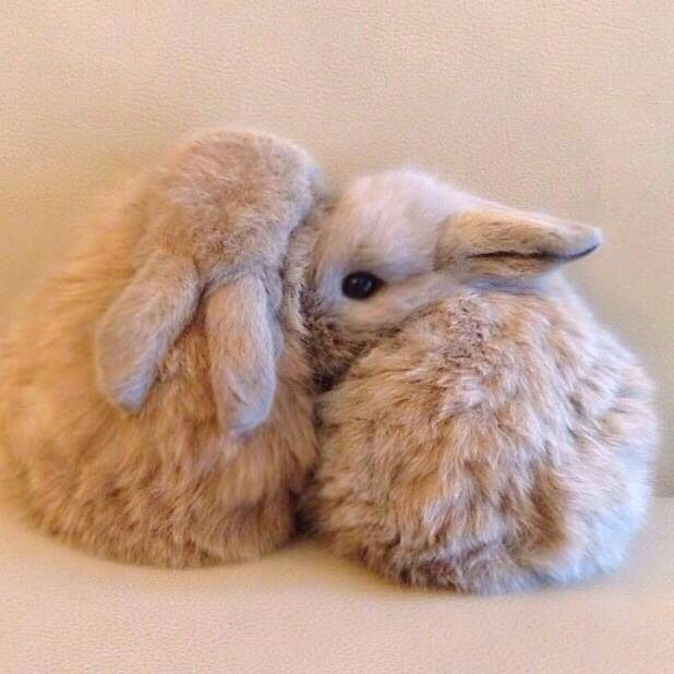 I like the bunny kind of love. It's the best kind of love.
