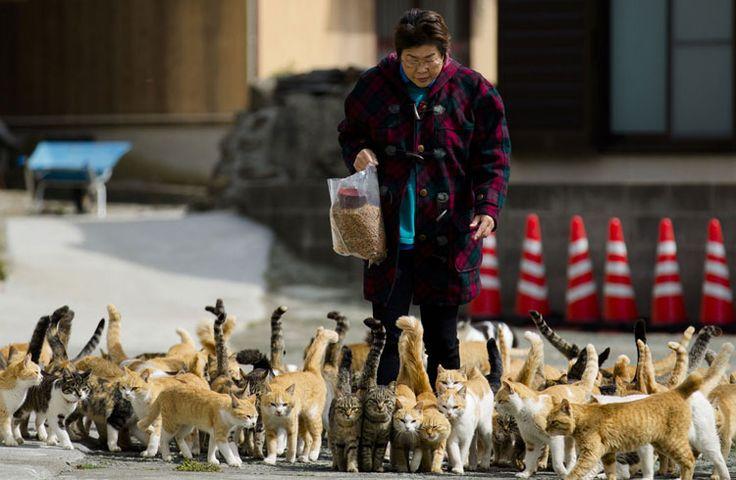 isla Aoshima gatos