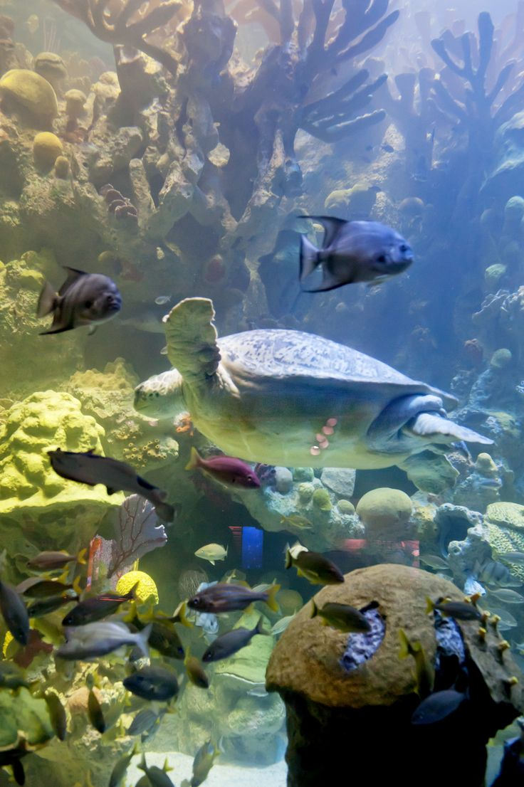 Freshwater aquarium fish massachusetts - Summary The Most Ideal Tropical Fish Temperature Is And 79 F Some Kind Of Research Must Be Done On The Fish To Know There Ideal Temperature Which Suits