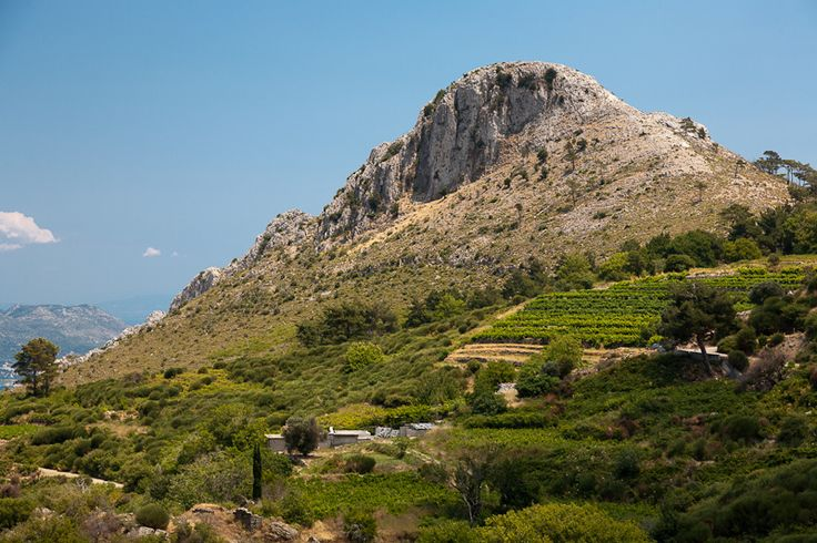 TRAVEL'IN GREECE I Vineyards in #Samos, #Greece, #travelingreece