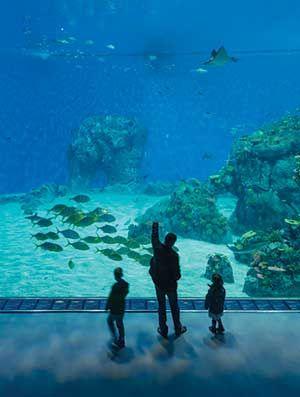 Den Blå Planet, National Aquarium Denmark Copenhagen