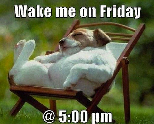 38 Best Happy Friday Dogs Images On Pinterest Adorable