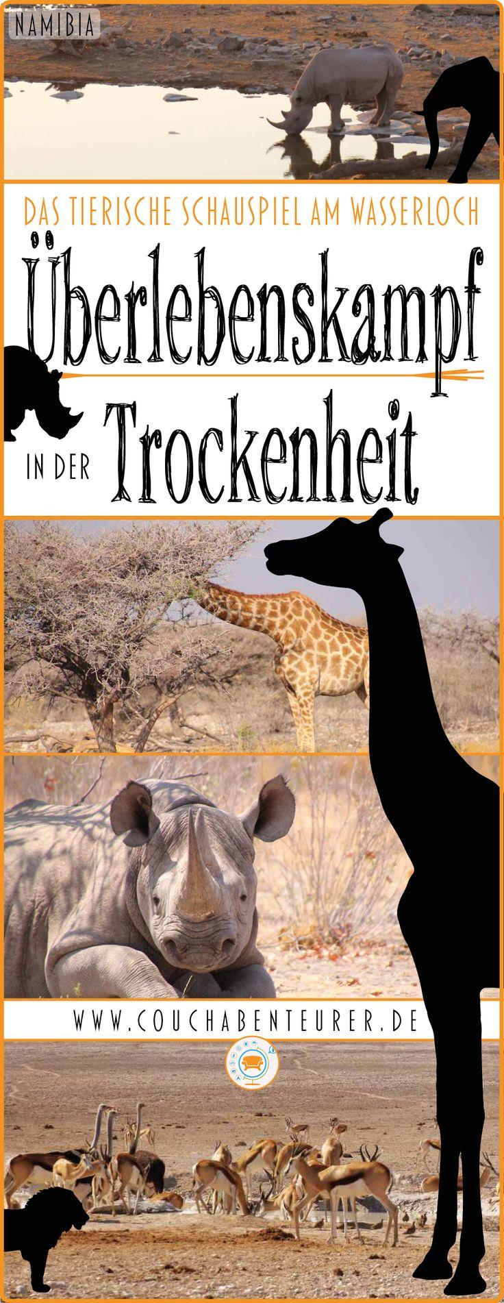 Wasser ist Leben und gerade in Afrika wird einem dies sehr deutlich vor Augen geführt. Ausgetrocknete Flussläufe, magere Tiere, staubige Straßen und laublose Bäume sind Symbole von Trockenheit und Dürre. Ein feuchtigkeitsspendendes Wasserloch ist dann nicht nur eine Oase des Lebens, sondern wird auch zum Pilgerort & Stelldichein von wilden Tieren und somit ein Highlight für Beobachter und Fotografen. #afrika #reisen #urlaub #ferien #tiere #wasserloch #nashorn #giraffe #travel #africa…