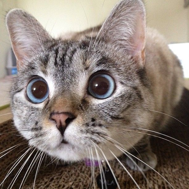 10 Most Famous Internet Cats in the World