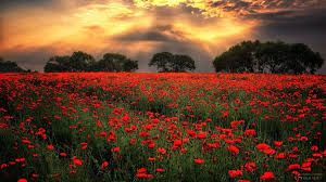 Afbeeldingsresultaat voor may your life be like a wildflower growing freely in…