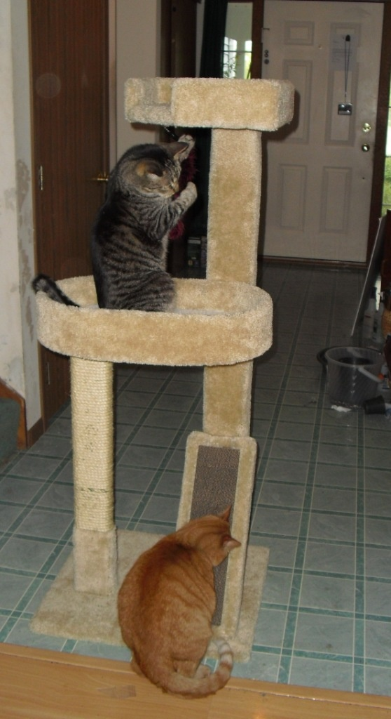 17 best images about pets on pinterest cat shelves cats for Diy cat playground