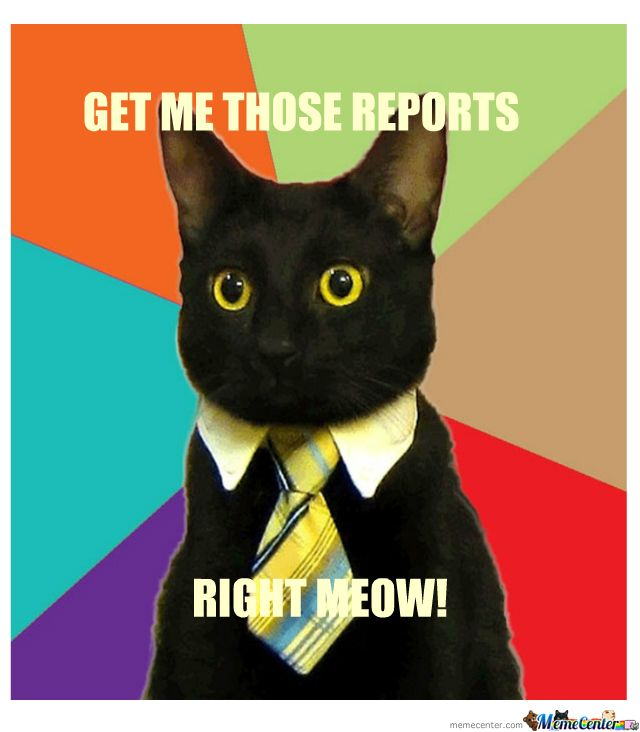 Cat Meeting Meme