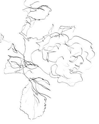 Develop Hand Coordination by Practicing Blind Drawing: Blind Contour Drawing Example - Rose