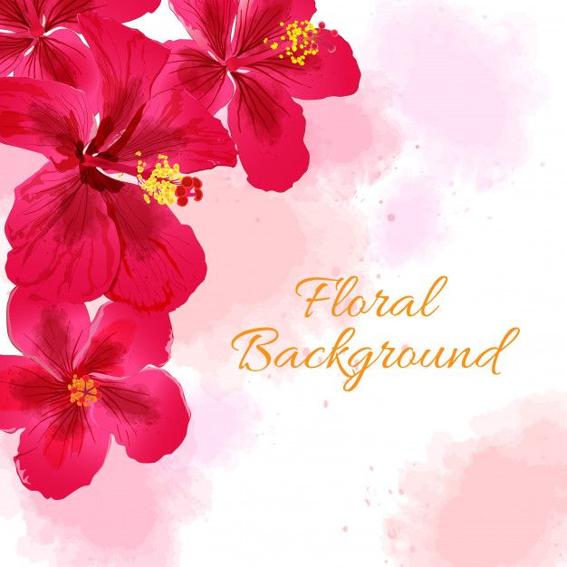 Hibiscus Flower Background Flower Backgrounds Hibiscus Flowers Floral Background