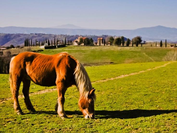 Un cavallo libero nella natura