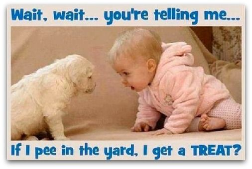Oh my goodness! Lol!! This is why we don't have a dog!