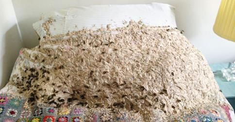 This is a nightmare that no one should experience!  http://www.clickondetroit.com/news/thousands-of-wasps-found-nesting-on-bed/27759136  Call A1 Bee Specialists in Bloomfield Hills, MI today at (248) 467-4849 to schedule an appointment if you've got a stinging insect problem around your house or place of business! You can also visit www.a1beespecialists.com!