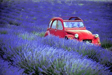 La Ᏸelle Provence • citroen 2CV in a field of lavender • citroen 2CV club