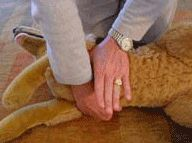 CPR for Dogs | petMD