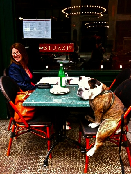 English Bulldog waiting patiently for her cappuccino...