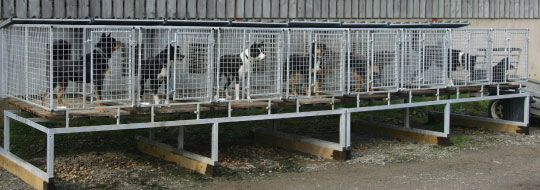 Hand Built Metal Dog Kennels For Farm And Working Dogs