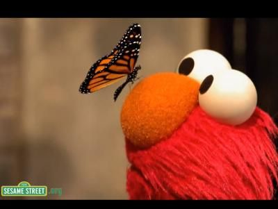 | ... Butterfly Friend Song: Song 1:46 Elmo sings about his butterfly friend