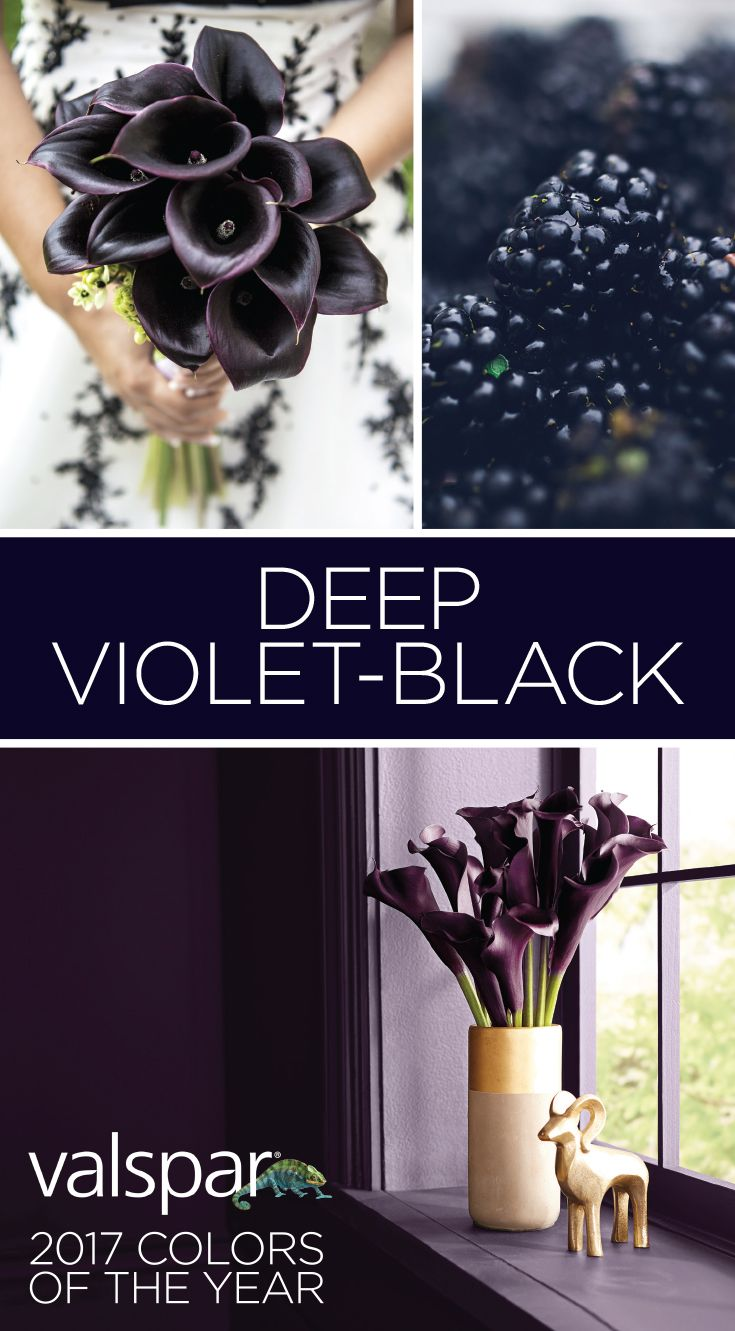 """A hidden undertone of violet draws you in, like the night sky. Powerful and meditative, deep purple-black creates drama without distraction."" Sue Kim, Valspar Color Strategist. One of 12 Valspar 2017 Colors of the Year: Black Currant VR089A at Ace. https://www.askval.com/ColorsOfTheYearLanding/Deep-Violet-Black"