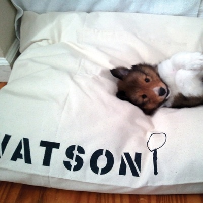 As this little guy can attest, you really can't go wrong with Bow Wow Beds' solid canvas or screen printed duvets.