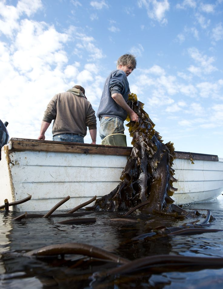 153 Best Seafood Trends Amp Supply Chain Images On Pinterest