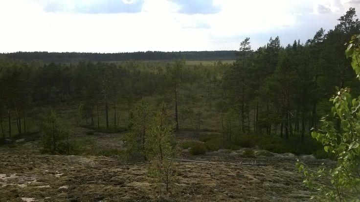 View over the swamp at Marttilan korven eräreitistö