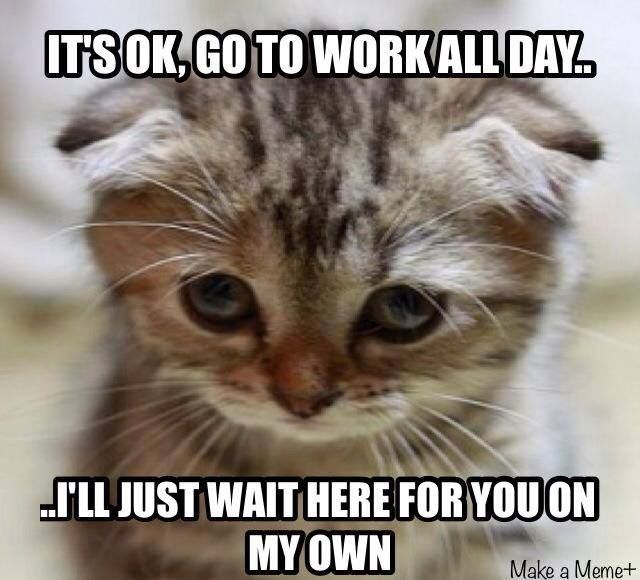 I Need Them All Cute Animal Quotes Funny Dog Memes Cute