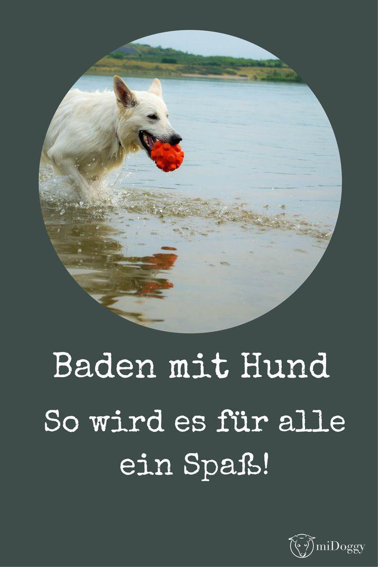 Hier erfährst du was du beachten solltest,damit der Badespaß für deinen Hund nicht zum Horrortrip wird.