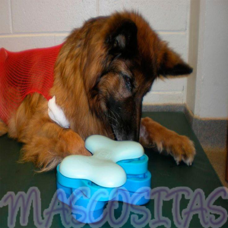 DogTornado tiene el propósito de ocupar a tu perro mentalmente para equilibrar la necesidad de estímulo mental.