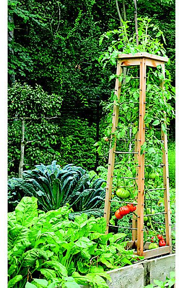 nice tomato trellis idea. DIY tomato pruning and trellis ideas