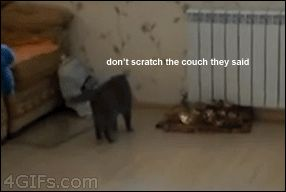 Animals, like Humans except when they dick around, it's funnier: Raiders of the Lost Comment Section - Imgur