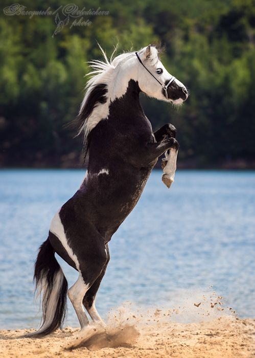 When I fall off of a horse I don't check to make sure I'm alright, I'll be just fine. I'll check the horse and make sure he is okay. Source : http://www.coolnsmart.com/horse_quotes/