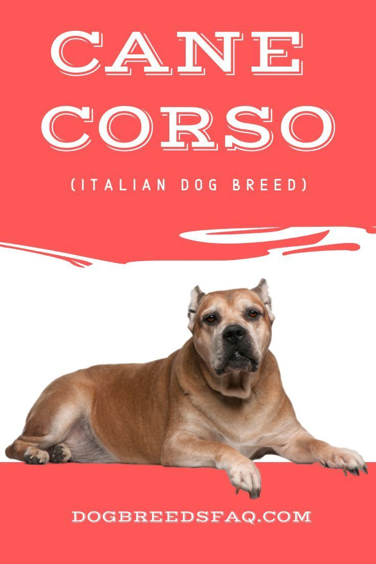 13 Amazingly Unique Italian Dog Breeds Famous Italian Dogs Dog