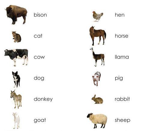 Farm Animals (Adult) Vocabulary - Maitri Learning  - 1