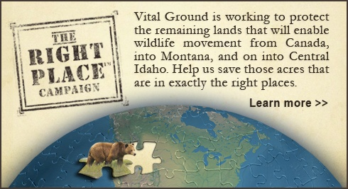 The Right Place Campaign   Vital Ground, home of Bart, Bart II, Honey Bump, and Tank, the acting Grizzlies. Foundation for the preservation of all bears.