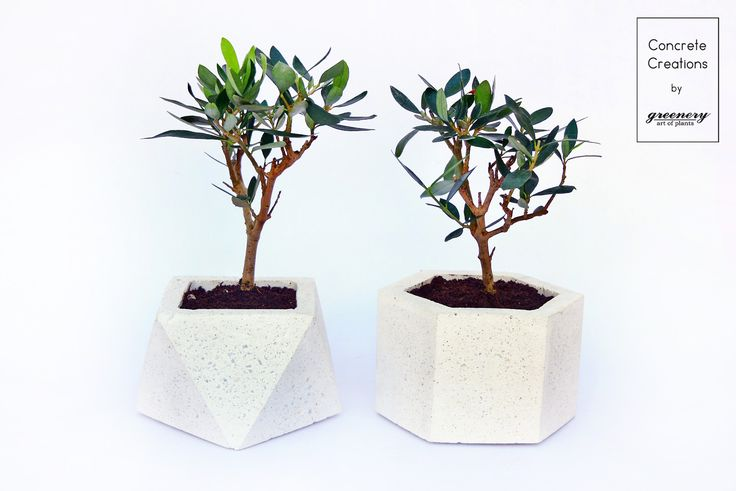 Concrete geometrical pots with mini olive trees! Available online: www.greenery.gr #greenery #greeneryoriginals #concrete #plants #chania