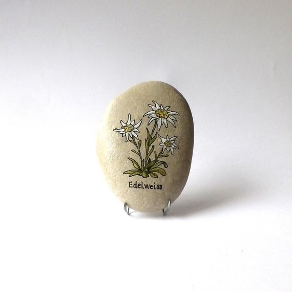 Peinture sur galet, fleurs Edelweiss
