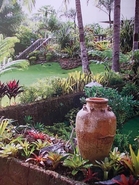 tropical garden love the pot idea florida landscapingflorida gardeninglandscaping ideastropical