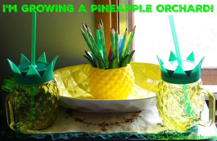 JDS - I've Grown A Pineapple Orchard To Go With My Apple Orchard! - http://jeweldivasstyle.com/ive-grown-a-pineapple-orchard-to-go-with-my-apple-orchard/